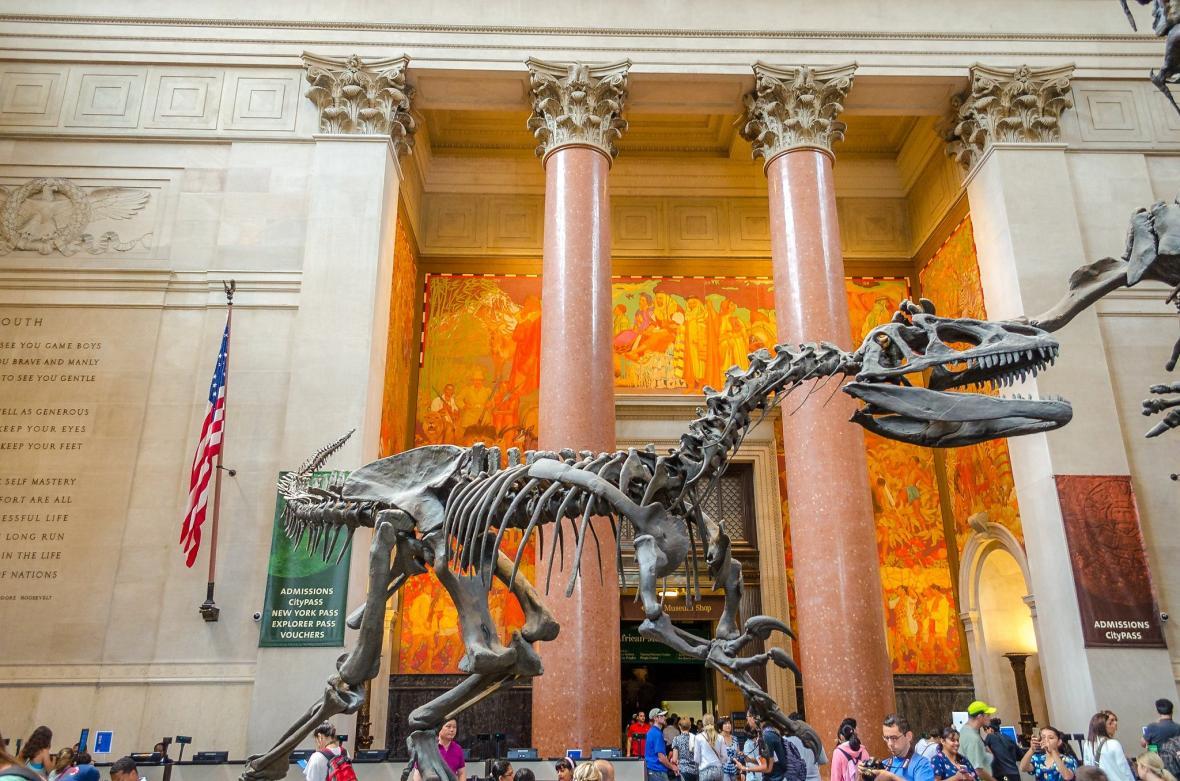 موزه تاریخ طبیعی آمریکا، نیویورک