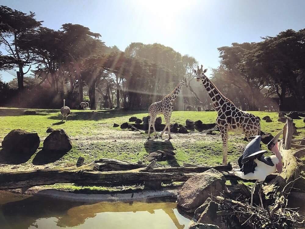 باغ وحش و باغ سانفرانسیسکو آمریکا