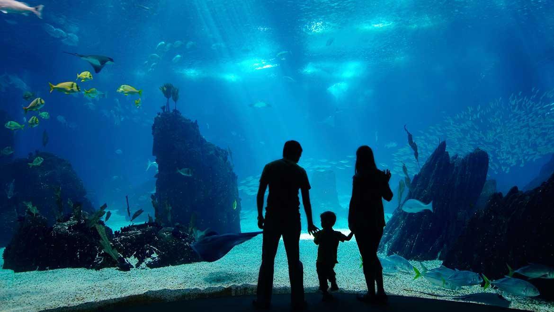 آکواریوم شید شیکاگو آمریکا (Shedd Aquarium)