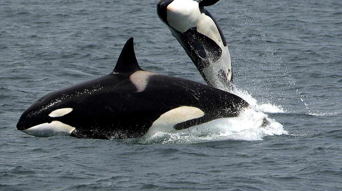 بهترین مکان ها برای تماشای نهنگ در کانادا