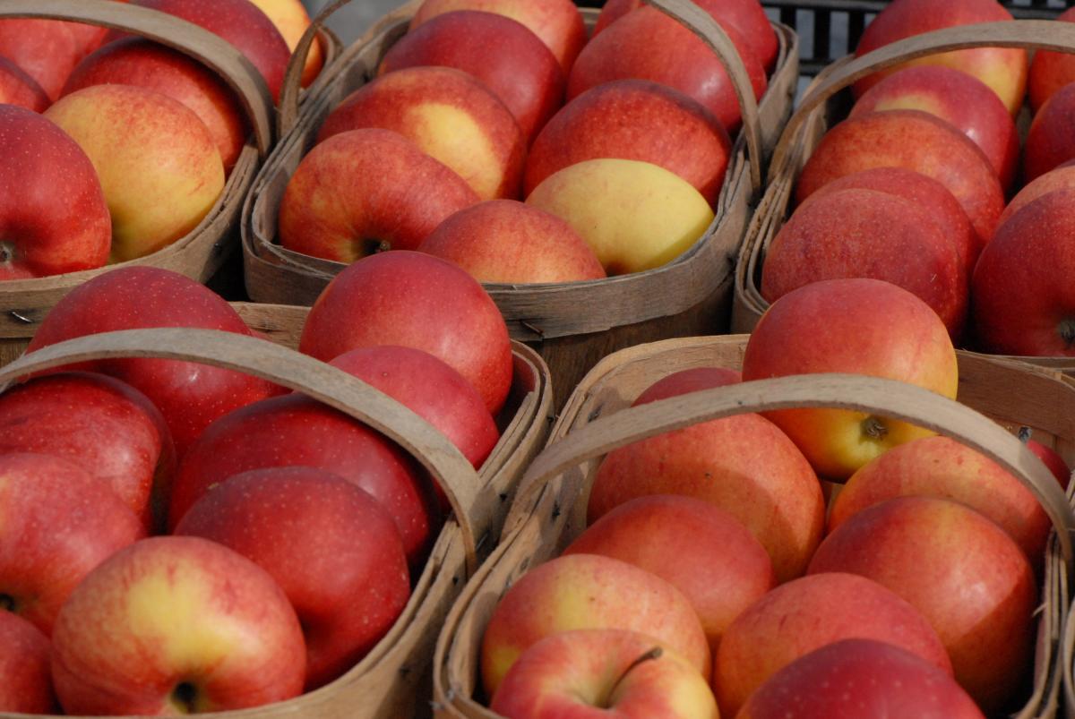 میوه های محبوب کانادایی