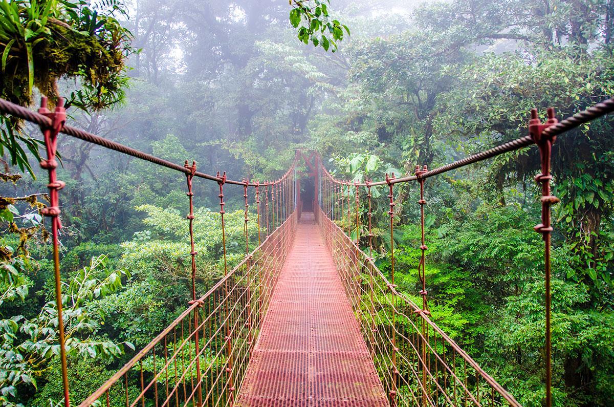 کوه Monteverde و جنگل های Cloud کاستاریکا