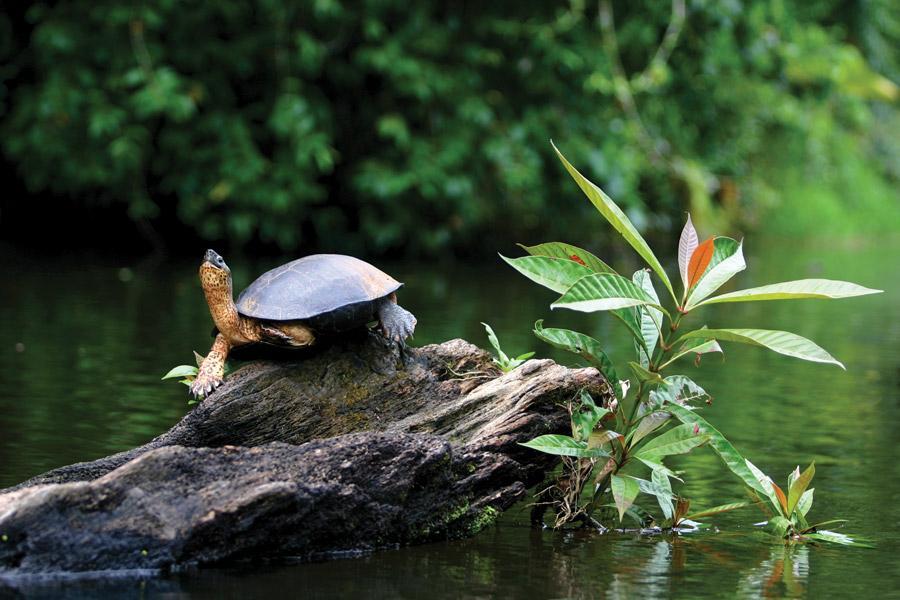 پارک ملی تورتوگرو (Tortuguero) کاستاریکا