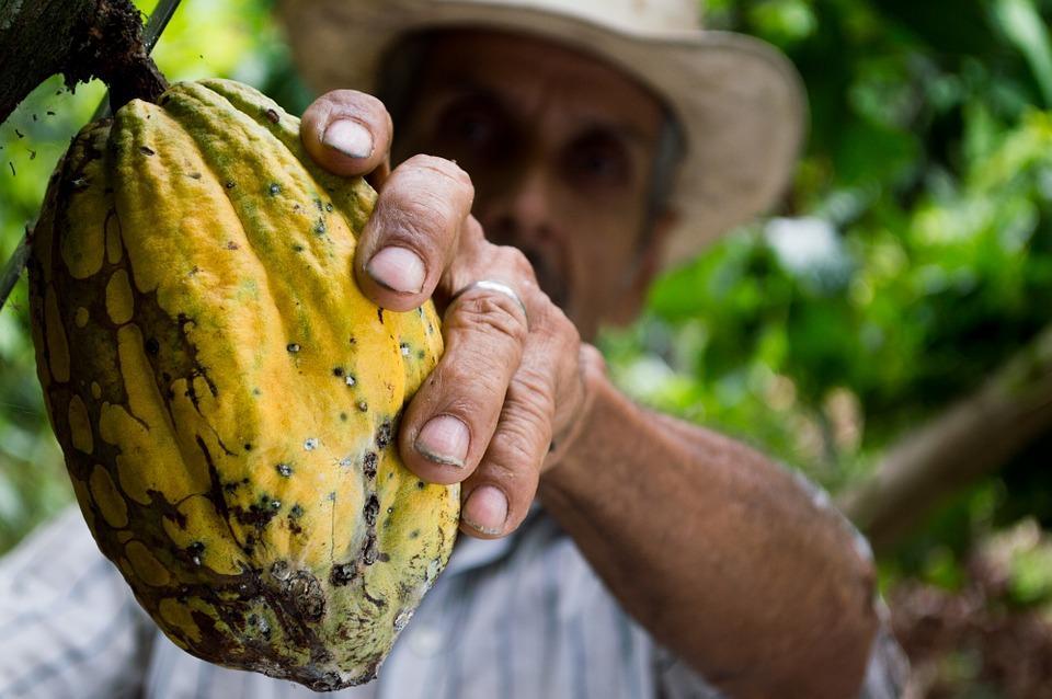 تاریخچه کاکائو در مکزیک